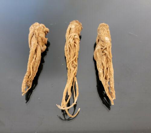 عرق السواحل الشجري عرق السواحل النباتي الروحاني البيع لعرق واحد فقط نادر جدا جدا