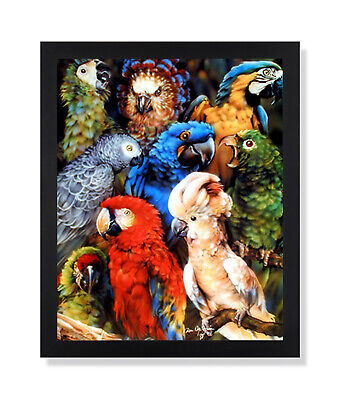 Nine Tropical Parrots Bird Collage Outdoor Wall Picture Black Framed Art Print ()