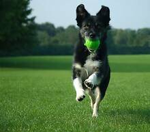 Free Dog walking Bruce Belconnen Area Preview
