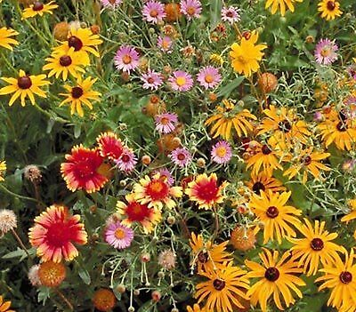 Outsidepride Perennial Wild Flower Seed Mix Planting Garden Patio Indoor 1 LB
