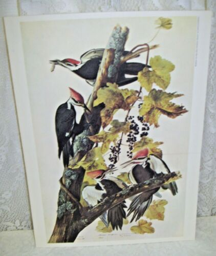Pileated Wood Pecker 1966 New York Historical Society Lithograph
