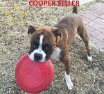 **Cooper**Seller