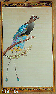 Bird Watching painting forest United States Water Color wild life PRINCE RUDOLPH