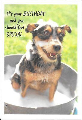 Funny Happy Birthday Dog Bubble Bath Clean Up Hallmark Greeting Card  - Happy Dog Bubble