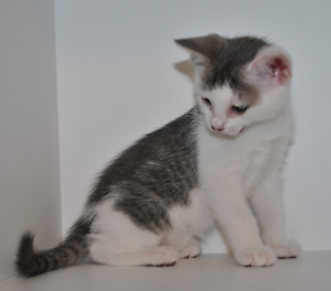 Adorable Kitten Ready for a Forever Home Now!