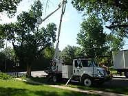 Tree Removal, Tree Pruning, all types of tree work