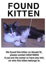 KITTEN FOUND IN NEWELL ST, FOOTSCRAY Footscray Maribyrnong Area Preview