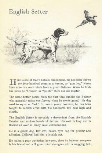 English Setter - 1950 Vintage Dog Print - Matted
