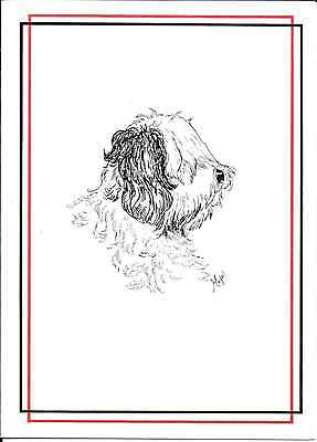 Funny Sheepdog Foresight Hindsight No Sight Encouragement Greeting Card