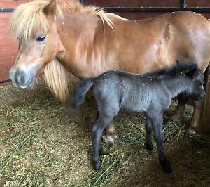 Free horses qld