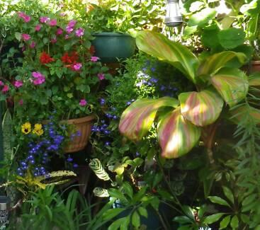 SATURDAY 18 NOVEMBER - SUPER CHEAP BEAUTIFUL PLANTS + Bricabrac