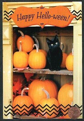Halloween Black Cat Kitten Pumpkins Cupboard EMBOSSED - Halloween Greeting Card - Halloween Animated Greetings
