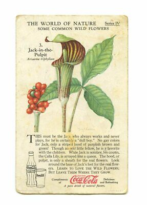 Vintage Coca Cola Card The World Of Nature Common Wild Flowers Jack ..The Pulpit