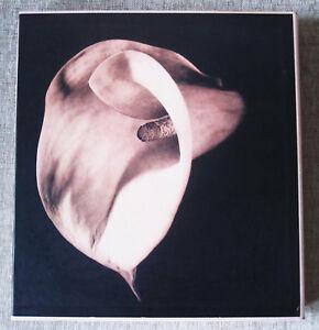 Robert Mapplethorpe: Pistils. 1996 HB DJ in a slipcase, As New.