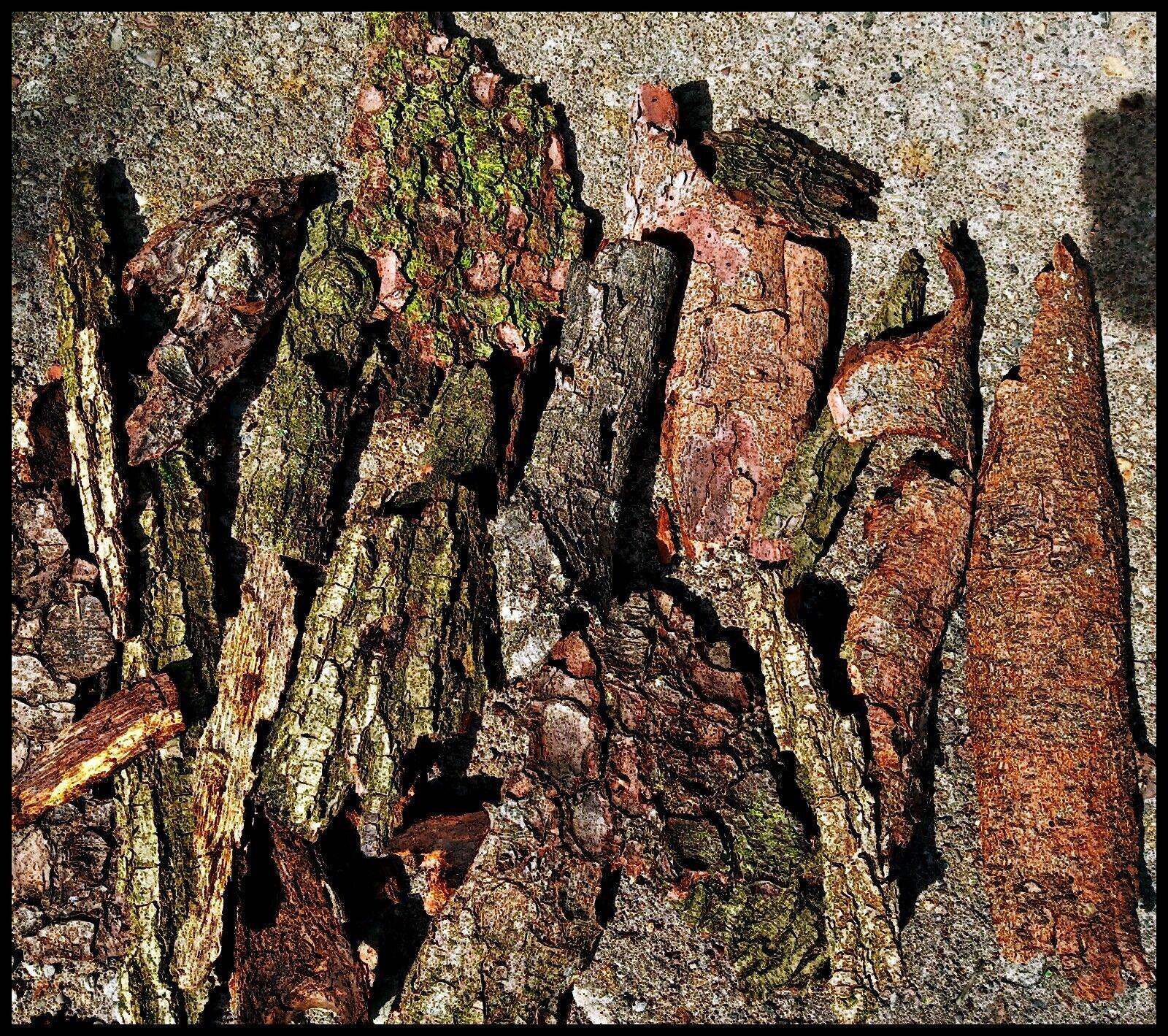 200g Pinienrinde Maritima Baumrinde natur Naturdeko Rinde Tischdeko