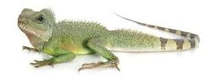 Available Reptiles for June