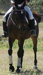 BOMBPROOF, SWEET, GORGEOUS BLACK, 7YO CONFIDENCE BOOSTER $3000 Beaudesert Ipswich South Preview