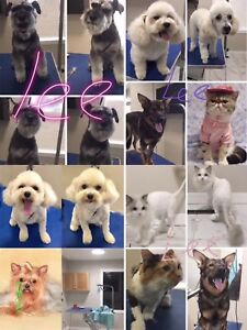 Dog wash find or advertise pet animal services in canada pet grooming service wash dog shave cat solutioingenieria Image collections