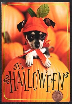 Halloween Card Dog Puppy Dressed Up Pumpkin Costume  - Greeting Card - NEW - Halloween Card Animated