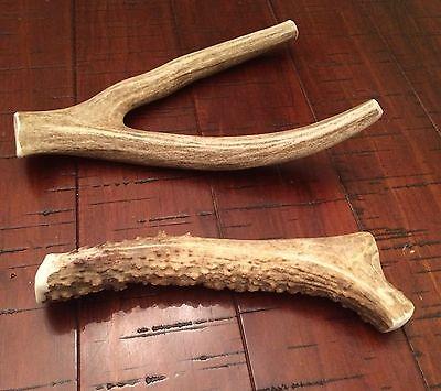 Long lasting! 1 Extra Large Deer Antler Dog Chew-Great Buy On Treats & Toys (Buy Deer Antlers)