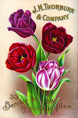 Canvas Wall Prints Vintage Seed Packet Pink Purple Tulips Flowers Print Picture (Pink Tulip Pictures)