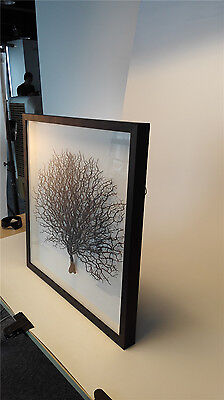 Modern wall art sea fan 3D shadow box wall decor photo framed with organic glass