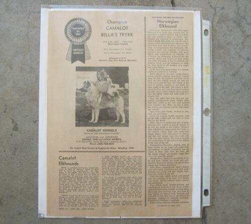 "Vintage Norwegian Elkhound ""Ch Camalot"