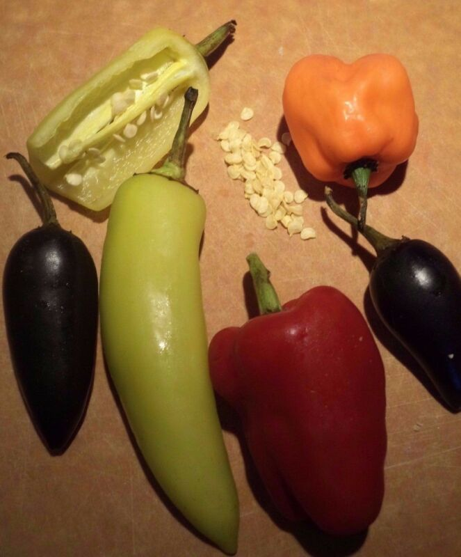 HOT PEPPER mix (35 seeds). US organic--Habanero, yellow jalapeno, cayenne, more!