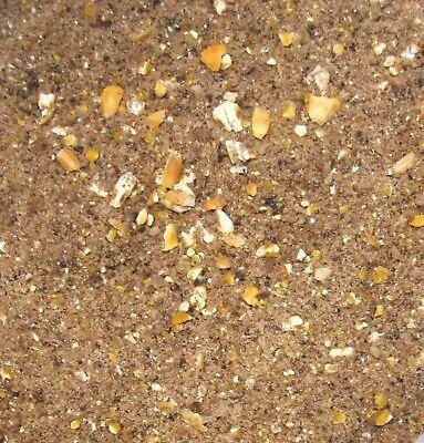 Karpfen Schleien Spezial mit Mais Lockfutter Anfutter 5 kg (1,78€/kg)