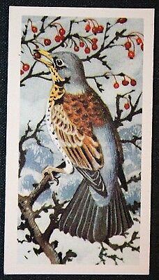 FIELDFARE    Superb Vintage Colour Card  # VGC