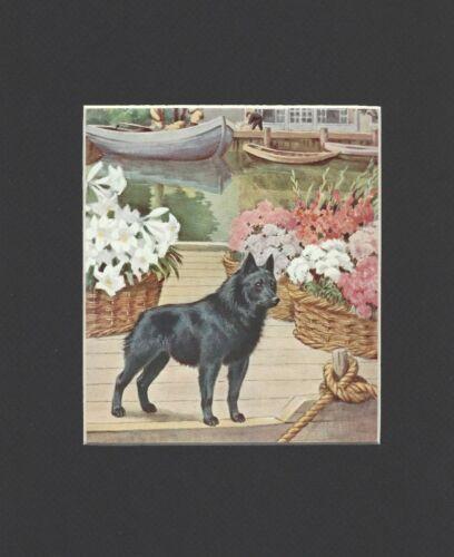 Schipperke - Vintage Color Dog Print - MATTED