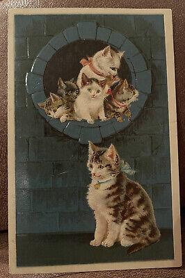 Antique Postcard Beautiful Cat Family Embossed Postmark 1913?