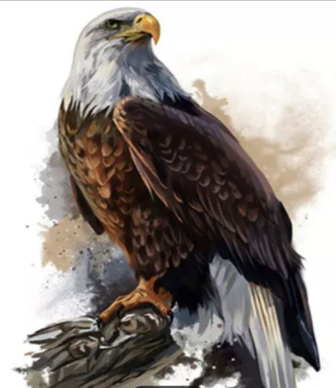 Paint by Numbers Kit Majestic Eagle Animal DIY Paint for Adults 16x 20in