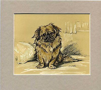 Lucy Dawson  ~ Pekingese ~  Colour Print Genuine Vintage 1936