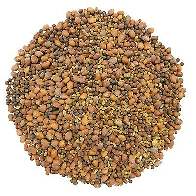 Food To Live ® Spicy Sprouting Seeds Mix — Alfalfa Radish Broccoli ()