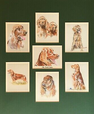 """THE IRISH SETTER Man's Best Friend Mounted Collectors Cards fit 12x10"""" Frame RED"""
