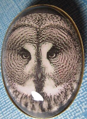 NEW! XL OVAL GLASS PICTURE BUTTON of a GREAT GRAY OWL -- AWESOME!