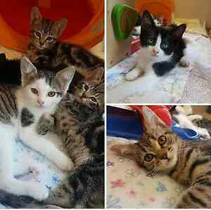 6 Rescue Kittens!! Baldivis Rockingham Area Preview