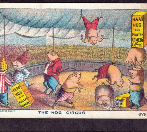 Dr Haas Hog Circus Clown Tent 1800