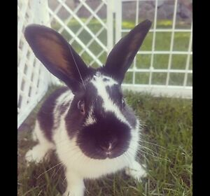 6 month old bunny