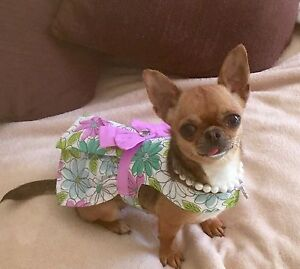 Looking for a dress maker for my Chihuahua's Beaumont Hills The Hills District Preview