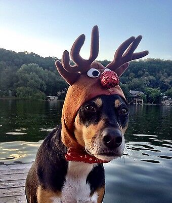 Reindeer Antlers for extra large dogs with 20-24