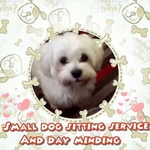 Small dog sitting service and day minding. Acacia Ridge Brisbane South West Preview