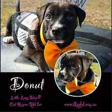 Apple and donut are up for adoption. Wynnum West Brisbane South East Preview