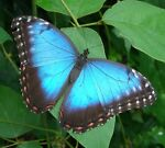 Blue Butterfly Thrift