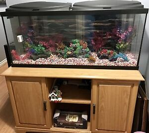 55 Gallon Tank and Stand Full Setup $400 OBO