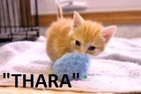 HANNA S.P.C.A. ALMOST AT FULL CAPACITY OF ADOPTABLE KITTENS/CATS