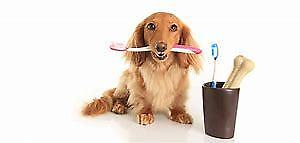Heritage Animal Clinic and Spay/Neuter Clinic Dental Month