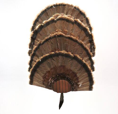 Turkey Fan Mounting Kit. 4 Fan Display System with beard holder   Copper