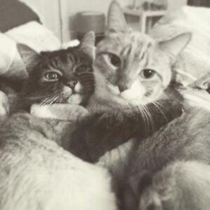 Gardienne chat à domicile